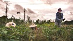 Our Farm pt.3