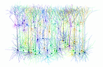 Neurons inverted-without-reds-2500-x-163
