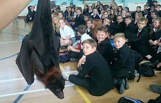 Fruit Bat, Mobile Menagerie UK, Animal Presentations.  London, South East England