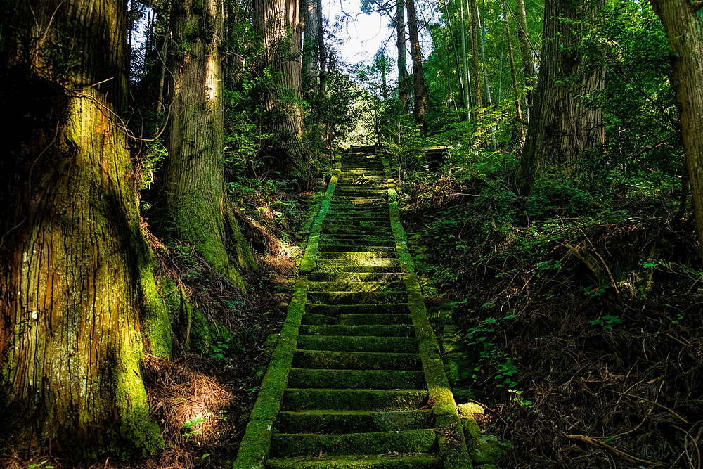 Moss-covered stairway leading up through a forest