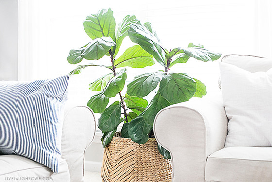8 Best Indoor Plants & How To Take Care of Them
