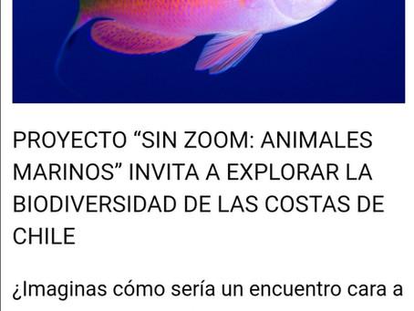 Noticias Ciencia Pública: SIN ZOOM, ANIMALES MARINOS