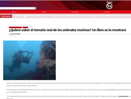 PÁGINA 14: SIN ZOOM, Animales Marinos. Libro de Oceanósfera mostrará animales a tamaño real
