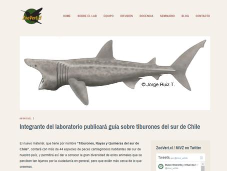 ZooVert.cl: Guía de Tiburones del sur de Chile