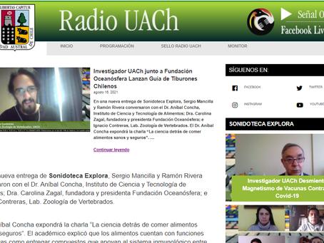 Radio UACh: Nucleo Pintarroja y Oceanósfera conversan acerca de tiburones de Chile