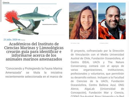 Oceanósfera y UACh realizarán guía de animales marinos amenazados