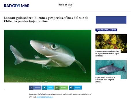 RADIODELMAR: Lanzamiento de nueva guía sobre tiburones de Oceanósfera