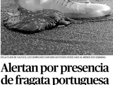 Hoy respondemos algunas preguntas acerca de la fragata portuguesa en el Diario Austral de Los Ríos