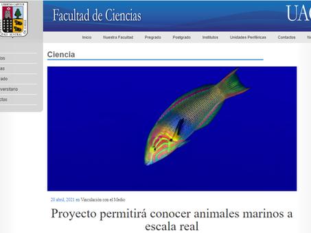 """""""SIN ZOOM, Animales Marinos"""", cuenta con el apoyo de la Facultad de Ciencias UACh"""
