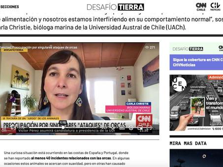 Interacciones entre orcas y embarcaciones en CNN Chile y CHV