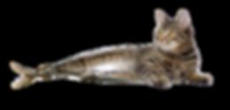 Catfish_hybrid_edited.png