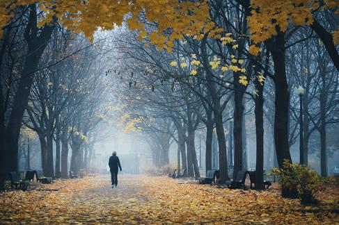 Matin d'automne brumeux au Parc Lafontaine