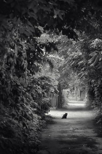 Chat noir dans une ruelle verte d'Hochelaga