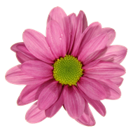 DBK_Flower_logo_small_transparent.png