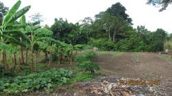 agriculture area