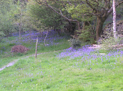 Blubell blue