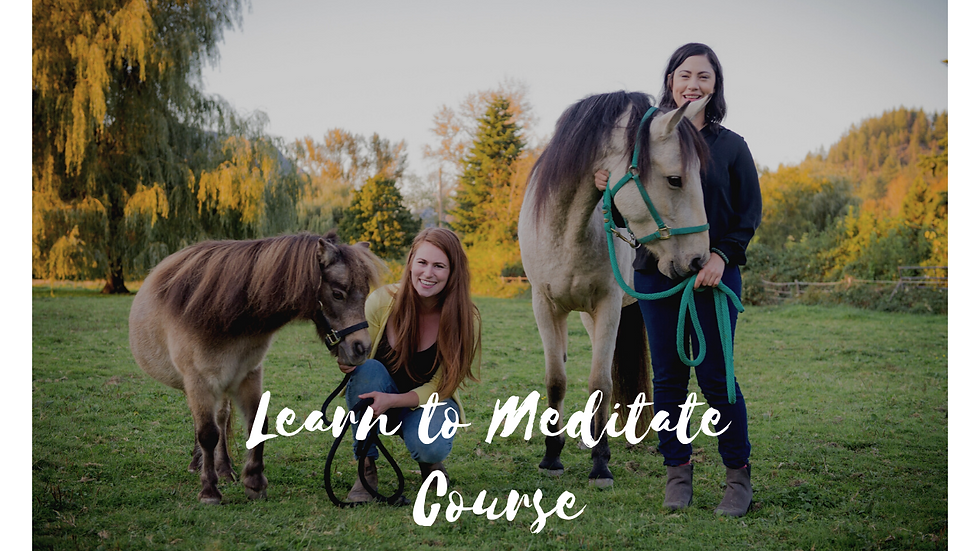 Learn to Meditate Course