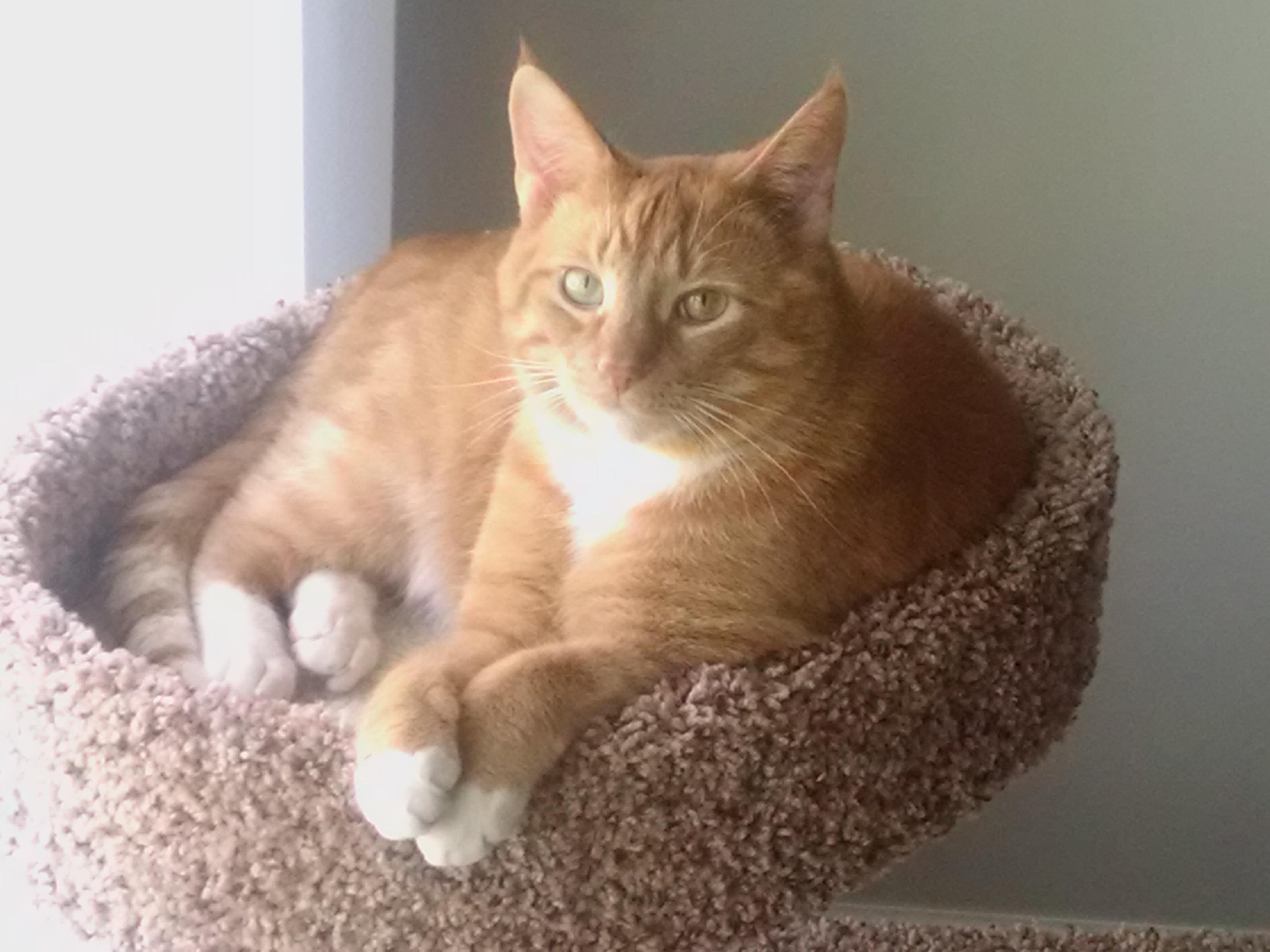 Garfield (Cruz)