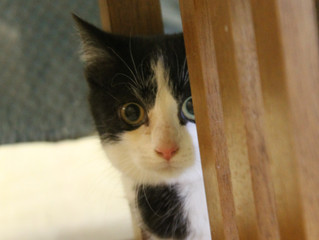Recent Adoptions and Leap Day Intakes