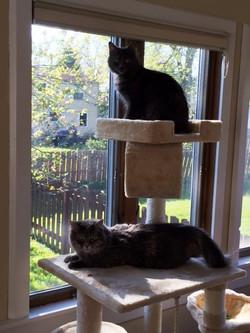Primrose and Daisy (Fluffy) 5