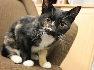 Week-to-Date Adoptions