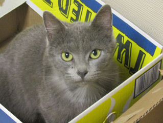 Check out Emma- our Cat of the Week