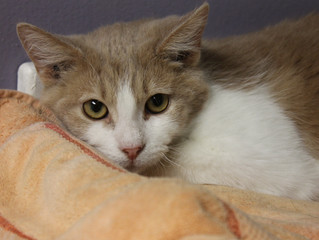 Wednesday and Thursday Adoptions