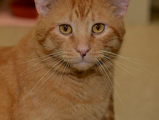 Check out Leo- our Cat of the Week