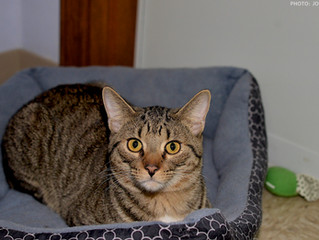 Check out Tiger- our Cat of the Week