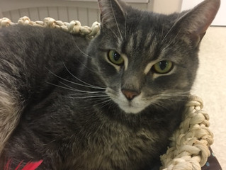 Check out Romeo- our Cat of the Week