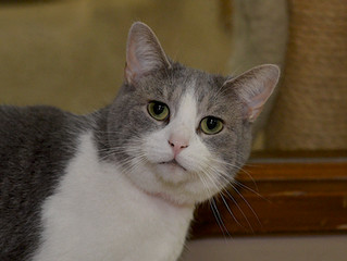 Check out Laura- our Cat of the Week