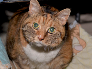 Check out Autumn- our Cat of the Week