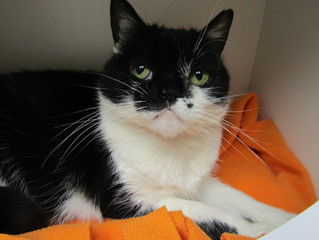 Check out Marilyn Monroe- our Cat of the Week