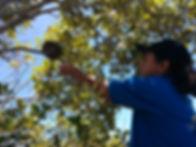 retrieving_fishing_line_from_nesting_tre