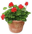non edible plant.jpg