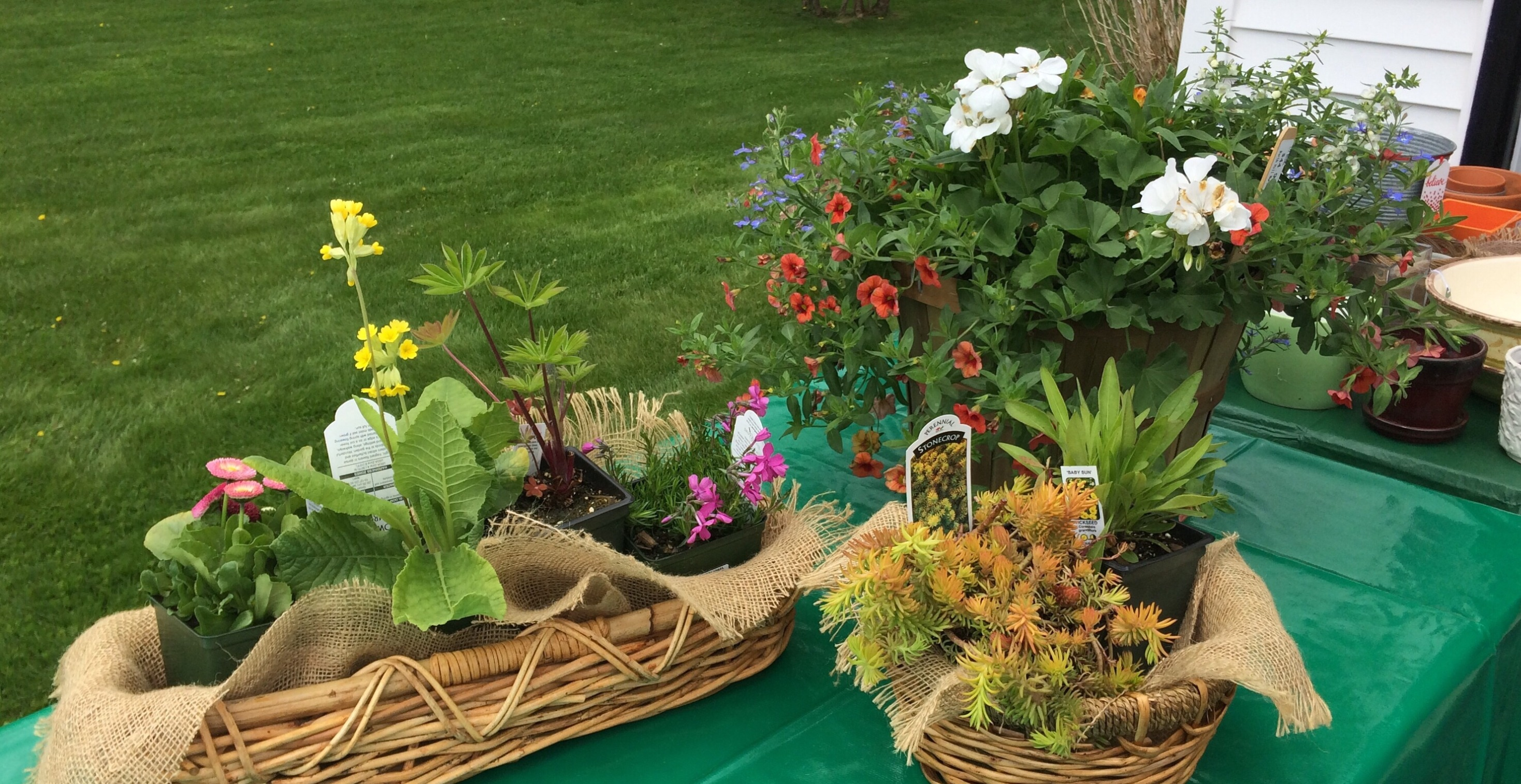 Auction Items at Plant Sale