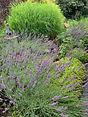 Kathryn Job garden.jpg