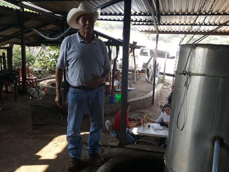 """La """"cuna del mezcal"""" michoacano está en Etúcuaro"""