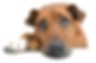 dog 2195708.png