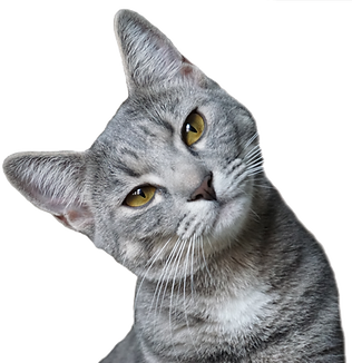 Gray-cat.png