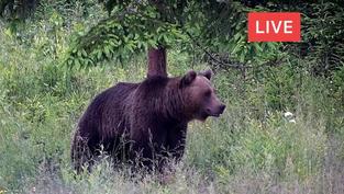 Un petit bout de nature quelquepart en Transylvannie en Roumanie.. A voir ours, renard, sanglier, cerf, lapin et oiseaux de toutes sortes.. Cliquez sur la photo pour lancer le live..