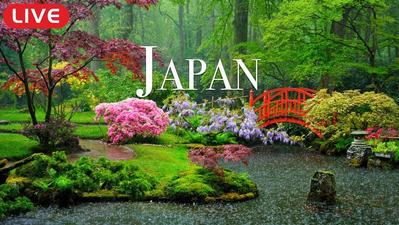 A l'occasion des Jeux Olympiques, venez parcourir le Japon en live 24h/24