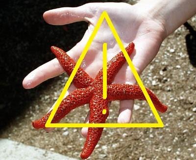 L'étoile de mer, victime de son succès!