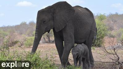 Situé dans une zone qui était autrefois l'ancienne « Route de l'Ivoire » reliant le Mozambique et le Zoulouland, le parc des éléphants de Tembe est réputé pour abriter les plus grands éléphants d'Afrique - et de la planète ! Le parc est éloigné, situé au cœur des forêts de sable et des zones humides du nord du Tongaland, juste à la frontière entre le KwaZulu-Natal et le Mozambique.