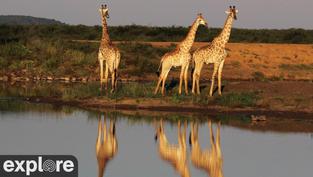 Magnifique Live 24h24 situé à la frontière entre le Bostwana et l'Afrique du Sud, près de la rivière Marico. Belles rencontres assurées.. Cliquez sur la photo pour lancer le live..