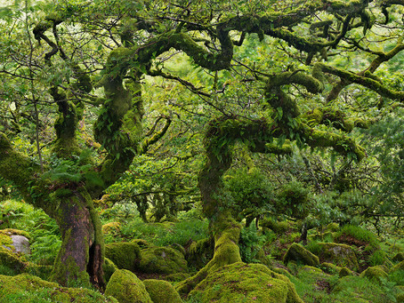 Une forêt enchantée..