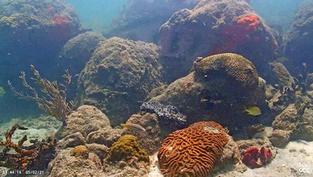 Situé au milieu des coraux de Floride à Miami, cette cam Live sous-marine diffuse 24h/24, l'occasion d'admirer de magnifiques poissons.. Cliquez sur la photo pour lancer le live..
