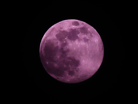 Did you know the Super Pink Moon in Scorpio got its name from Indigenous Americans?