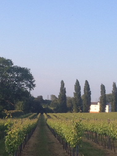 Galleywwod Vineyard Vista