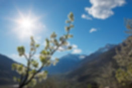 The apple blossom in spring in Tyrol is an unforgettable experience